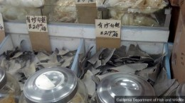 Federal Appeals Court Upholds California_s Shark Fin Ban | NBC Bay Area