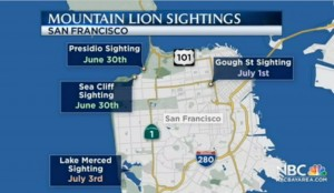 Four Mountain Lion Sightings Reported in San Francisco and Presidio | NBC Bay Area-1-1